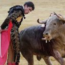Bullfight show - tickets on-line image