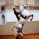 Spanish Riding School image